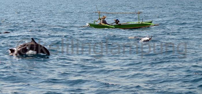 Lumba-lumba dan nelayan